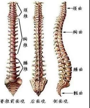 脊柱也是人体比较容易受伤的部位之一。